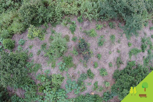 Drones são solução para mapeamento de áreas verdes