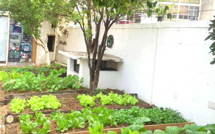 Galeria do Rock inaugura horta orgânica na cobertura