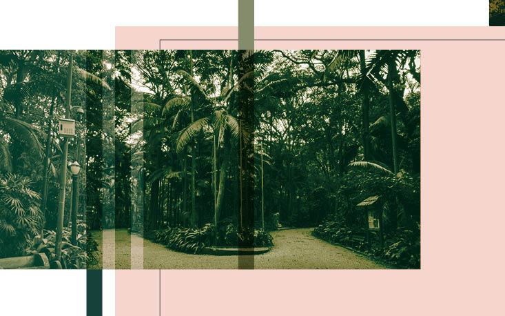 Projeto pretende recuperar a biodiversidade do Parque Trianon