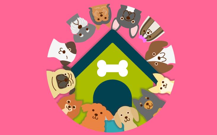 Férias estimulam demanda por hospedagem para animais de estimação