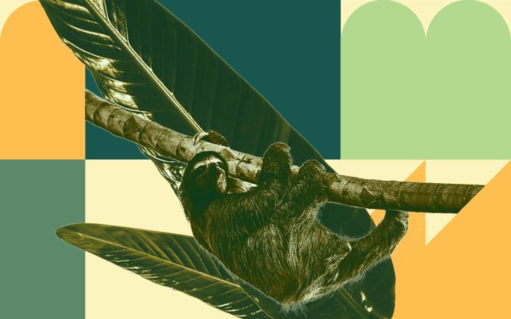 """""""Viva a Mata! 2021"""": FecomercioSP apoia conciliação do desenvolvimento econômico com o uso sustentável de recursos naturais"""